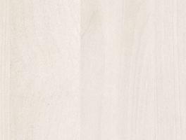 Betulla sbiancata 1601